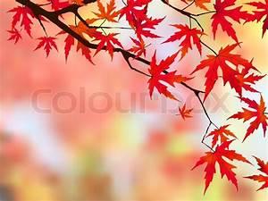 Ahorn Rote Blätter : brilliant rote bl tter auf einem japanischen ahorn vektorgrafik colourbox ~ Eleganceandgraceweddings.com Haus und Dekorationen