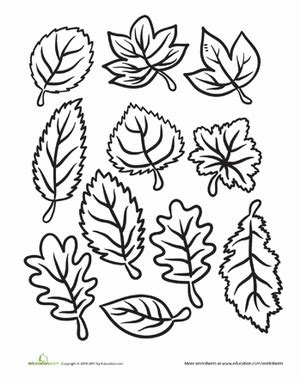 color the fall leaves worksheet education 240 | color fall leaves nature kindergarten