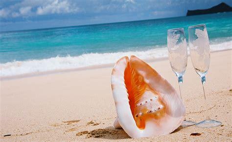 hawaiian conch shell   weddings