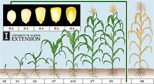 Corn Planting Chart