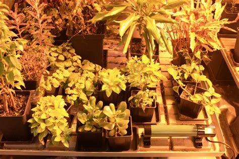 chauffage chambre de culture le froid dans la culture du cannabis du growshop