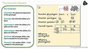 Gcse Biology Genetic Diagrams  Edexcel 9-1