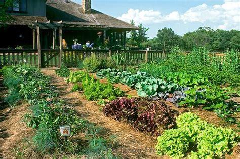 large fenced in vegetable garden grows in sun in