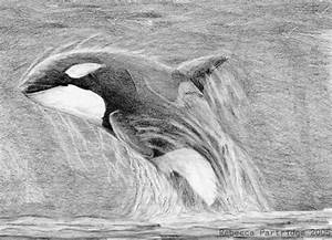 Orca Leap by SyKoticOrKa on DeviantArt