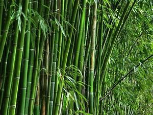 Menu - Order Online - Bamboo Teri House