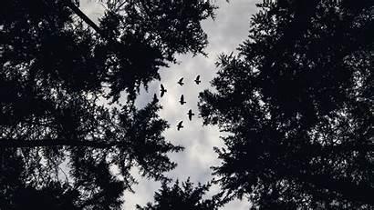Birds Trees Bottom Bw Tops Background Hdtv