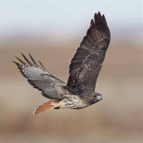 birds of prey jimobil