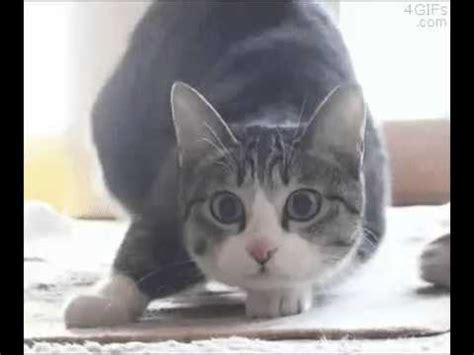 wiggle cat  shaq slayer edition youtube