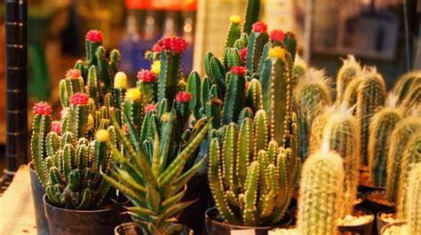 กระบองเพชร (Cactus): สายพันธุ์ของกระบองเพชร