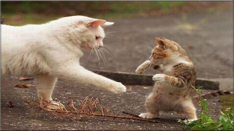 funny cats compilation   funny cats fails