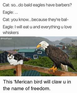 Bald Eagle Eating Cat
