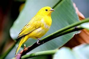 Wie Wird Ein Spiegel Hergestellt : lebenserwartung wie alt wird ein kanarienvogel ~ Bigdaddyawards.com Haus und Dekorationen