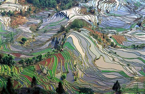 yuanyang rice terraces file terrace field yunnan china denoised jpg wikimedia