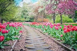 Tulpen Im Garten : tulpen und die liebe blumen news by ~ A.2002-acura-tl-radio.info Haus und Dekorationen