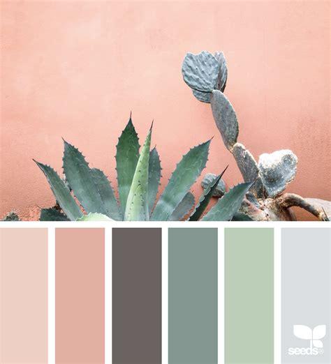 color seeds cacti color design seeds