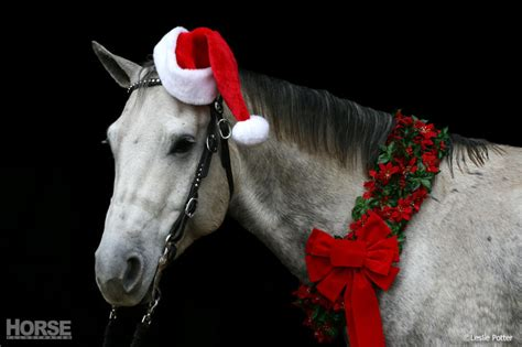 cedarwind performance horses horse boarding riding