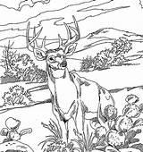 Deer Coloring Realistic Pages Printable Getcolorings sketch template