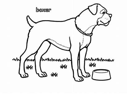 Boxer Dog Pages Coloring Bowl Boxers Empty