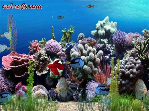 arriere plan bureau anim gratuit free aquarium desktop wallpaper wallpapersafari