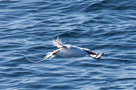 quick review of pelagic birding trip by todd mcgrath