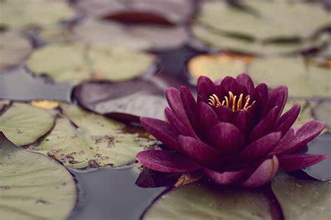 Lotus Flower Bomb On Tumblr