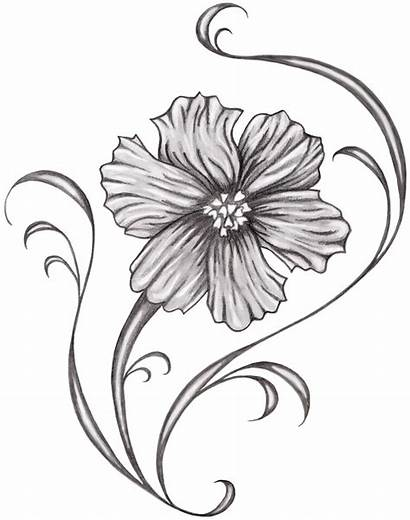 Birth October Flower Tattoo Cosmos Month Flowers