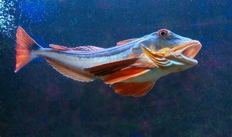 aquarium du laboratoire arago banyuls sur mer 66650