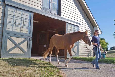 horse cost  horse