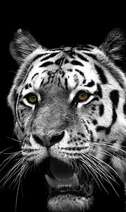White Tiger Mobile Wallpapers - Wallpaper Cave