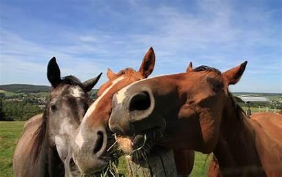 Cute Horse Wallpapers Horses Wallpapertag