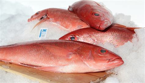 snapper fish calories nutrition grouper taste nutritional facts important information fresh market pacific species delicious healthy fillets food