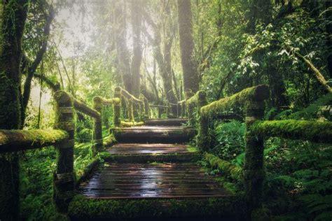 evergreen forest hd wallpaper