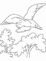 Seagull Albatross Drawing Couple Colour Coloring Template Gull sketch template