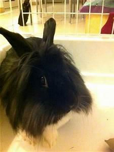 Mettre Twitter En Noir : a donner beau lapin noir et blanc t te de lion ~ Medecine-chirurgie-esthetiques.com Avis de Voitures