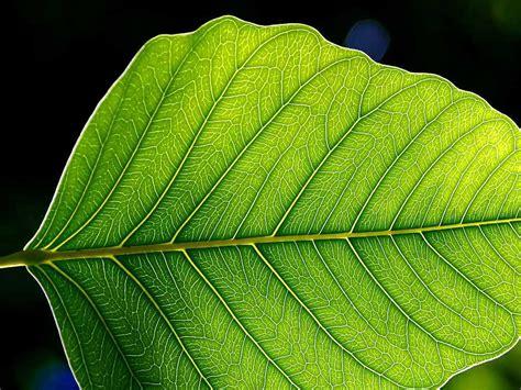 artificial leaf breakthrough brings energy efficient