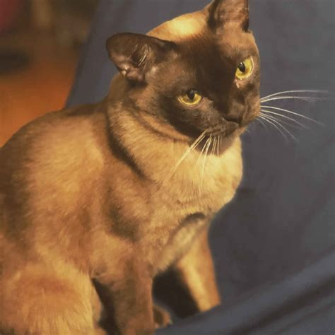 wer ist intelligenter kater oder katze abenteuer katze