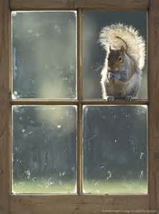 Squirrel Looking in Windows Images