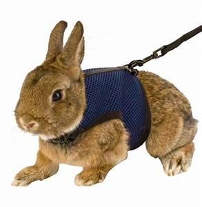 harnais laisse pour lapin nain 3939cosy3939 animaloo With maison rondin bois prix 9 maison pour lapin nain animaloo
