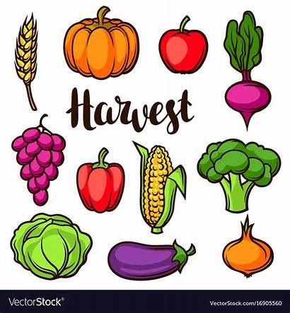 Vegetables Harvest Fruits Autumn Clipart Vector Fall