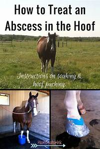 How To Treat An Abscess In The Hoof  Instructions On