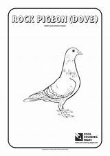 Coloring Pigeon Pages Rock Cool Birds Animals Educational Activities Wings Stripes sketch template