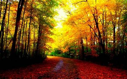 Fall Autumn Wallpapers Backgrounds Computer Nature Scenery