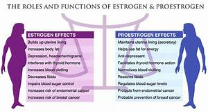 Factors Causing Estrogen Dominance