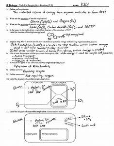 Cell Energy Flow Chart Photosynthesis And Cellular Respiration Worksheet Fresh In Synthesis