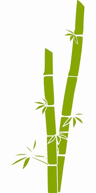 Bamboo Plants Fake