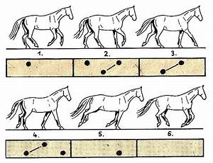 97 Best Images About Horse Gaits On Pinterest