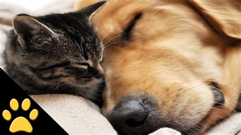 dogs cat dog cutest ever pets change