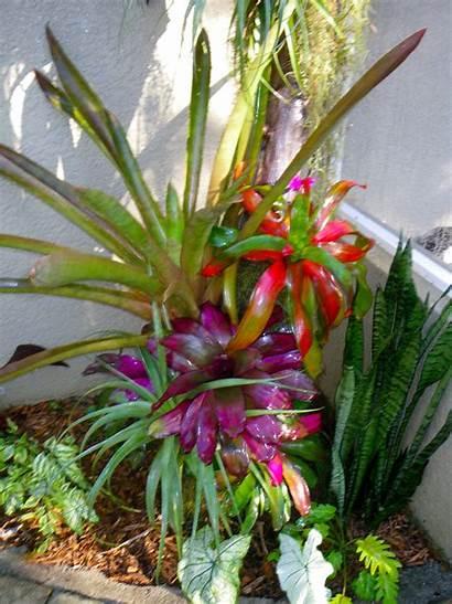 Plants Landscaping Tropical Landscape Garden Poolside Florida