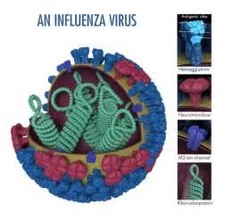 Influenza Type A Viruses - Avian Influenza (Flu) Influenza
