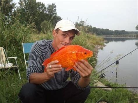 gros poisson pris a la peche a la carpe dans le gard